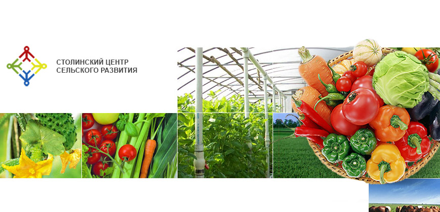 Vegetable-growing network of experimentation, exchange and dissemination of information (ExNet)